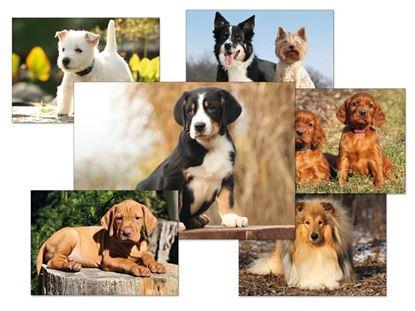 Obrázek Pohlednice dětské psi - mix motivů