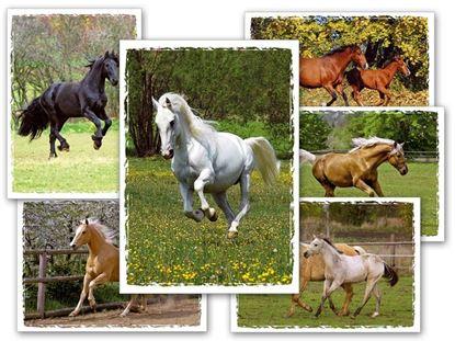 Obrázek Pohlednice dětské koně
